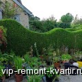 Какие растения можно использовать для создания живых изгородей? - VIP-REMONT-KVARTIR.RU