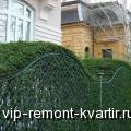 Живая изгородь. Плюсы и минусы - VIP-REMONT-KVARTIR.RU